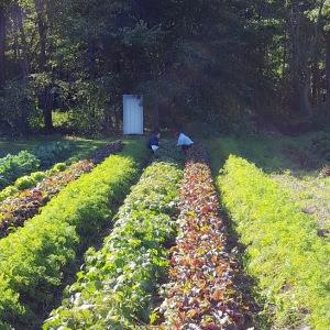avodah-gardens